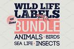 野生动物标签插画
