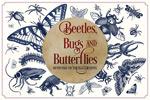 古昆虫插图