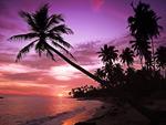 海边黄昏椰影
