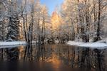 融雪中的森林
