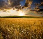 黄昏下的农田