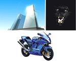 高楼、黑豹和摩托