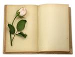 玫瑰花与旧书