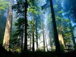 幽静的森林