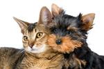 可爱的猫和狗