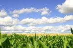 植物天空图片