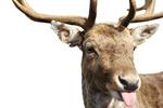鹿图片素材