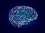 3D模型风格大脑