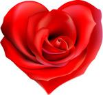 心形红色玫瑰花