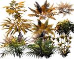 纪蕨类植物PSD