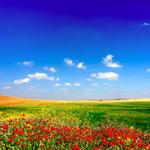 草地天空花朵
