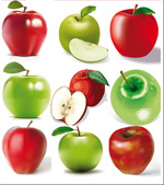 矢量写实苹果