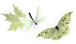 矢量蝴蝶蜻蜓