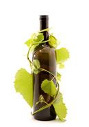 葡萄藤酒瓶
