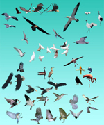 各种鸟类素材