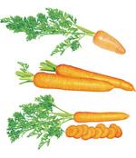 超写实胡萝卜
