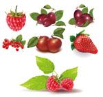 红色的水果矢量