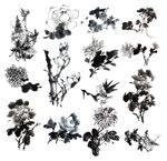 国画水墨花卉3