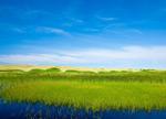草地湿地高清