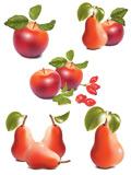 写实苹果和梨