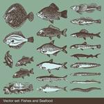 大鱼矢量素材