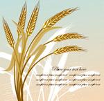金色的小麦矢量