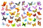 漂亮的蝴蝶矢量