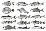 鱼单色图鉴
