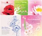 彩色花朵卡片
