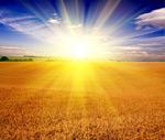 阳光下的麦田