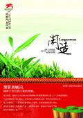 龙园号普洱茶