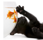黑猫与金鱼1