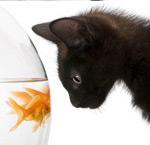 黑猫与金鱼2