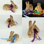 兔子与丝带
