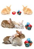 兔高清图片