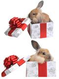 礼品兔高清图片
