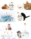 家猫与金鱼