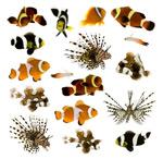 各种鱼类-1