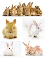 可爱的小兔子2