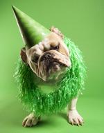 带帽子的狗狗