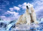 北极熊和企鹅