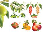 水果矢量素材