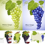 葡萄叶葡萄