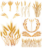 黄色麦穗01