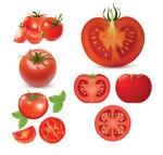 西红柿矢量
