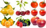 新鲜水果矢量素材