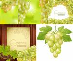 成熟莹润葡萄
