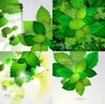夏季绿叶卡片