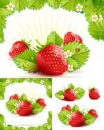 新鲜草莓矢量