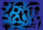 海洋鱼类剪影
